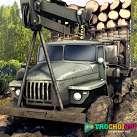 Lái xe tải chở gỗ